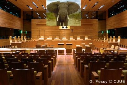 elephant courtoom